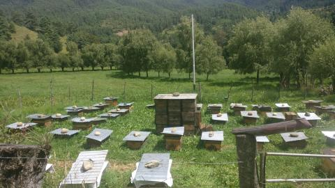 Modern Beekeeping In Dophuchen Yields Much Sought-After Bhutanese Honey, Royal Jelly And More